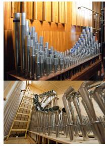 organ6